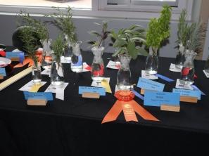 ngc flower show 9-19 3