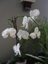 ngc flower show 9-19 65